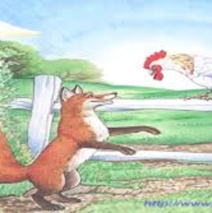 Cunning fox & cock