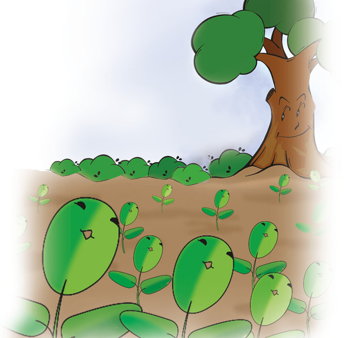 The Trees in the Forest, a folktale